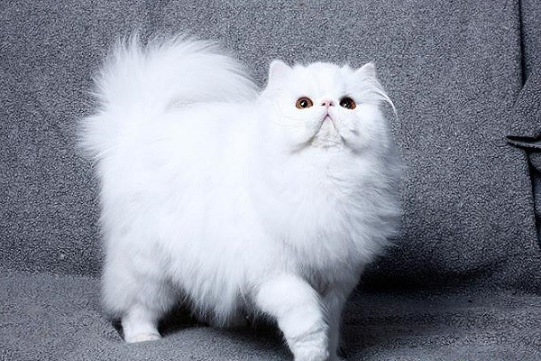 Mơ thấy mèo là điềm gì? Đánh con số đề nào chắc ăn nhất?
