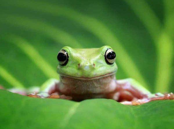Giải mã giấc mơ thấy ếch, con số liên quan là số mấy?