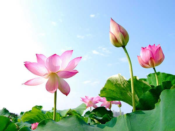 Nằm mơ thấy hoa là điềm dữ hay lành - Đánh con số nào?