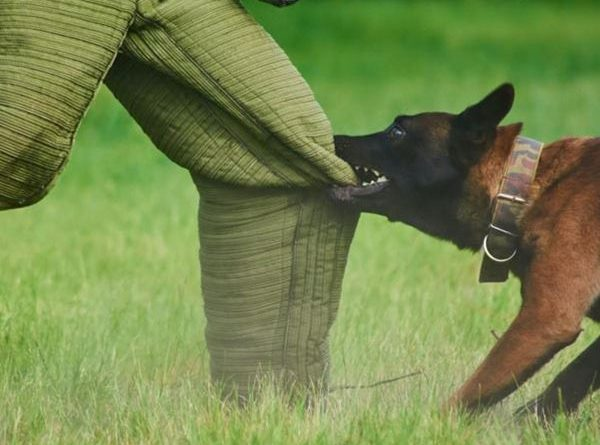 Mơ thấy chó cắn có phải điềm xui? Đánh ngay con lô đề nào?