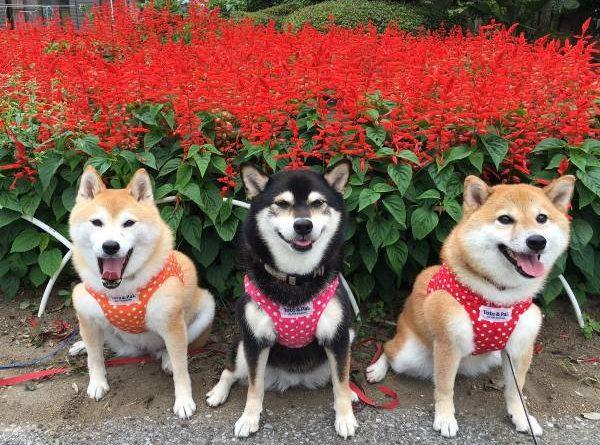 Nằm mơ thấy 3 con chó có ý nghĩa gì đánh con gì dễ trúng